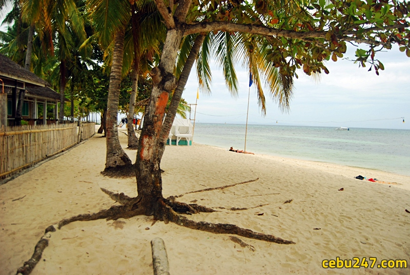 malapascua cebu beach