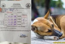 what-to-do-if-you-get-bitten-by-dog-animal-in-cebu